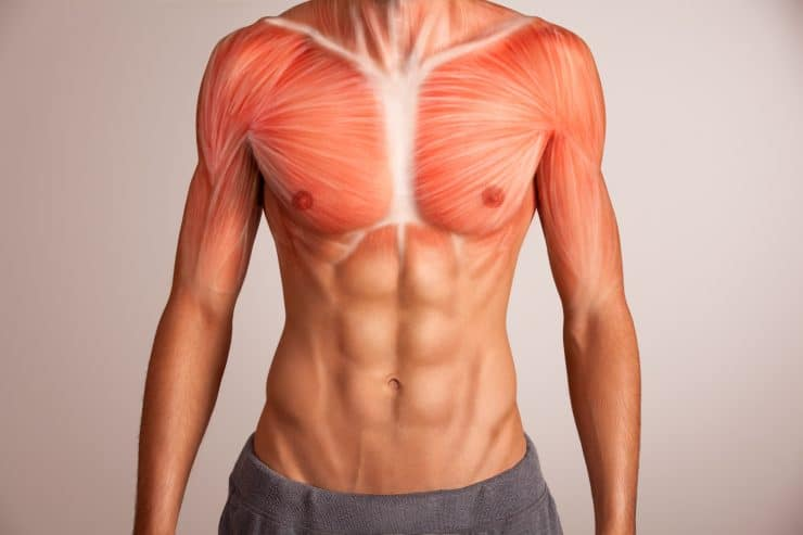 upper chest muscles