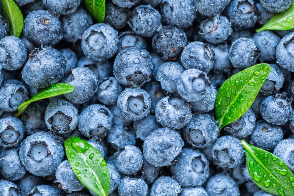 bilberries vs. blueberries
