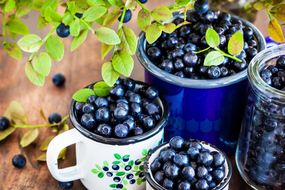 bilberry for weight loss