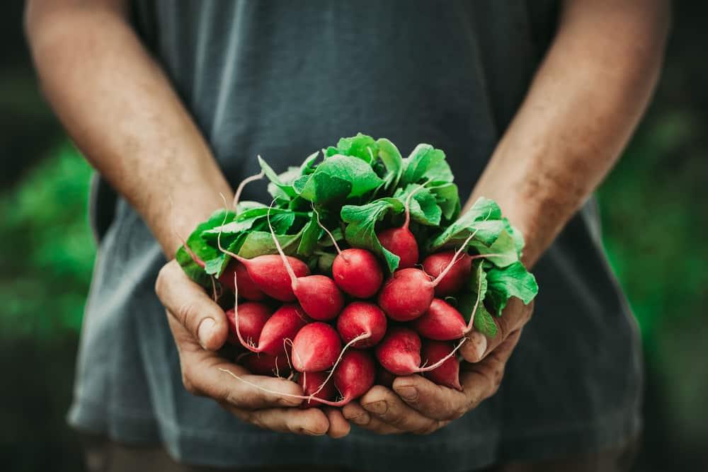 benefits of radishes