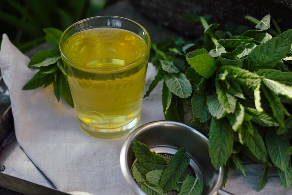 best tea to drink to lose weight fast