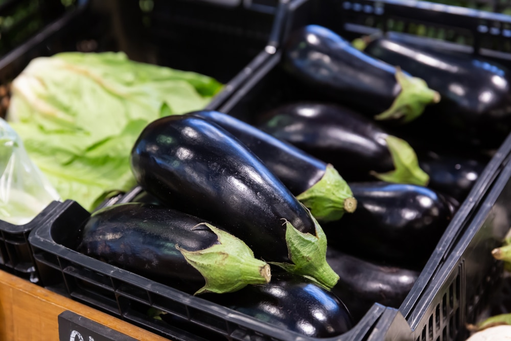 healthy eggplant recipes for weight loss