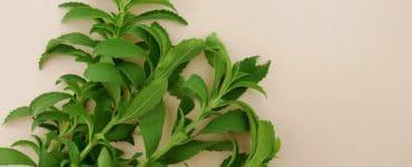 stevia vs sucralose