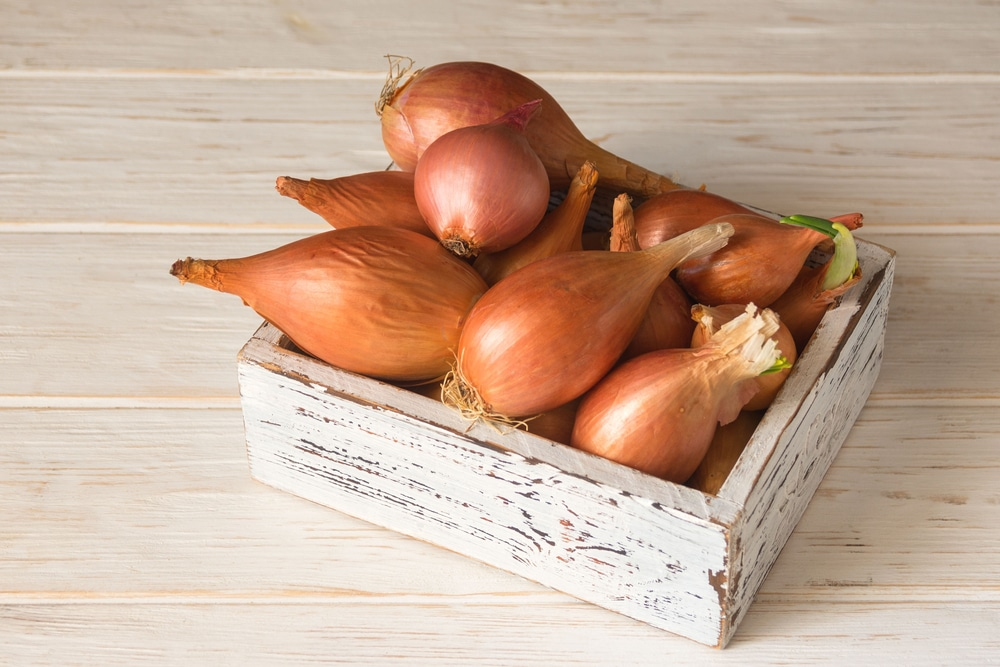 best vegetables to eat daily