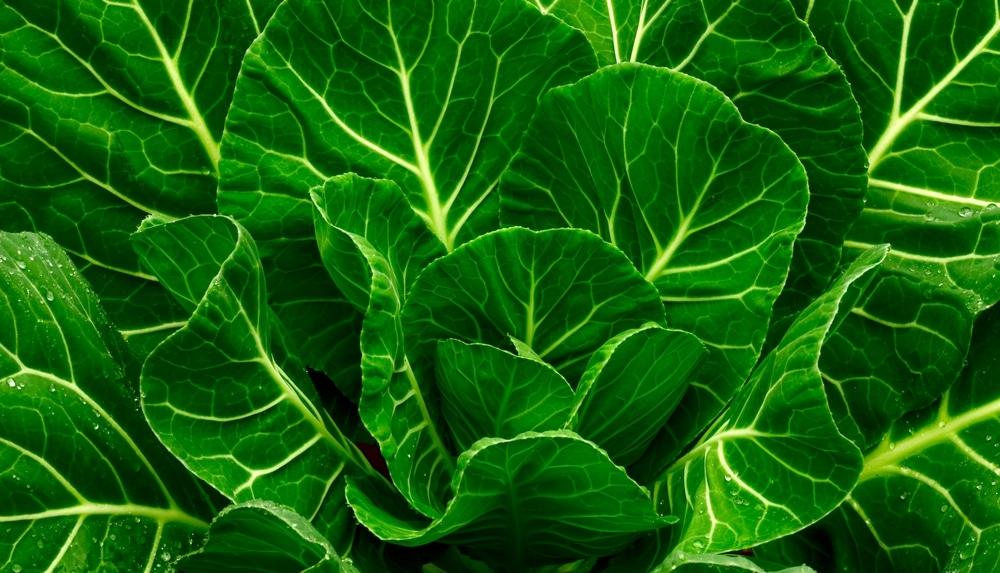 green leafy vegetables recipes